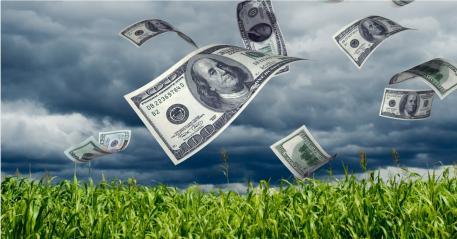 Money blowing in a cornfield