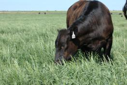 soil health is important for your cowherd