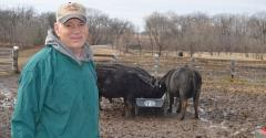 David Warfield stands near beef cattle