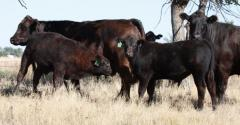 Beef's sustainability advantage