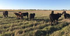 Reporting Manure on Pastures