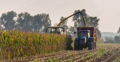 Managing silage from late-planted corn