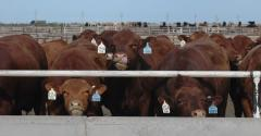 According to the Daily Livestock Report being a cattle feeder so far in 2015 hasnrsquot been a lot of fun at least if you equate making money with fun Estimated cattle feeding returns are mired deep in red ink in fact 2015 could turn out to be the worst year ever DLR reportsEven in the bestcase situation if the last four months of the year turn out much better than anticipated 2015 would post the lowest perhead return since 2012 Importantly 2012 was the worst most negative return since