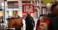 Animal rights demonstration