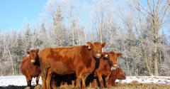 Winter is nigh and the combination of colder weather and a growing fetus means cows need adequate nutrition But is your hay up to the task Cattle producers should consider testing hay for quality to insure they meet nutritional requirements of cows and keep them in good condition through the winter reports the Southwest Farm PressldquoSometimes we find hay is better than we thought and we can save some money on supplementationrdquo says Jason Banta Texas AampM AgriLife Extension Service be