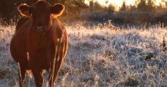 Prepare for fall calving
