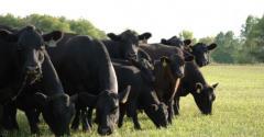 cowherd sustainability