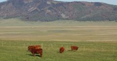 5 Trending Headlines: Pasture conditions great, but drought creeping in; PLUS: Fence-line hay feeders
