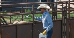 cattle parasite control for spring