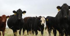 business strategies for cattle farmers