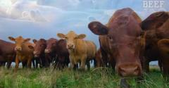 Pasture Post: Proactive Pasture Management