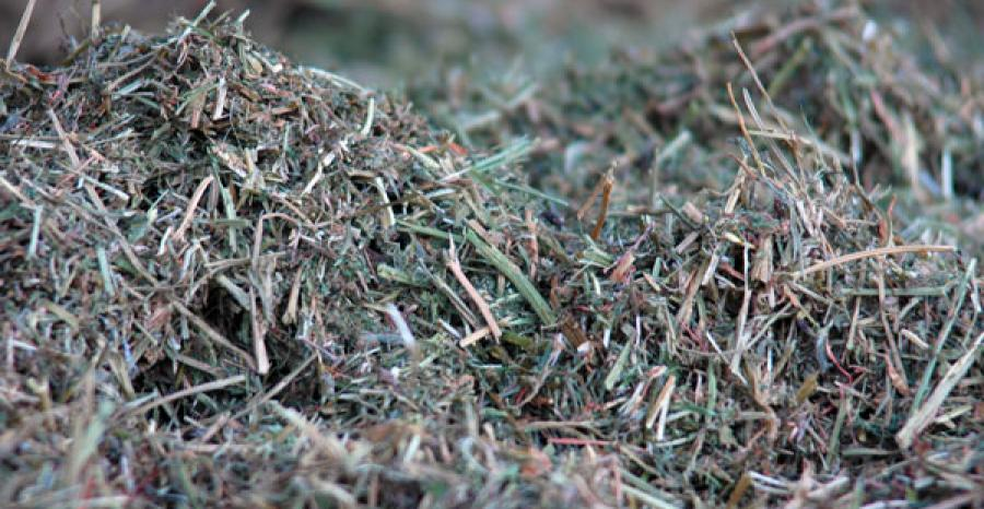 Nutrition In Your Forage Supply