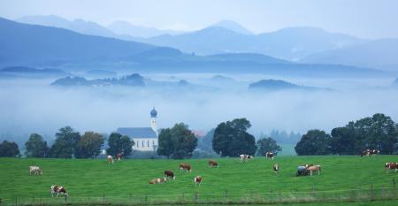 11-19 faith culture and cattle.jpg