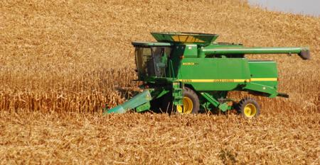 Corn harvest at rural New Trier MN Photo by Susan Winsor