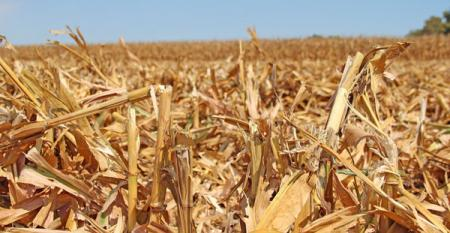 """The case for early fall vet-work in """"corn states"""""""