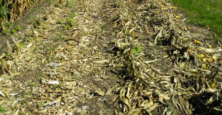 Use ldquoBT Chopperreg vs OEM green stalks seven days afterrdquo