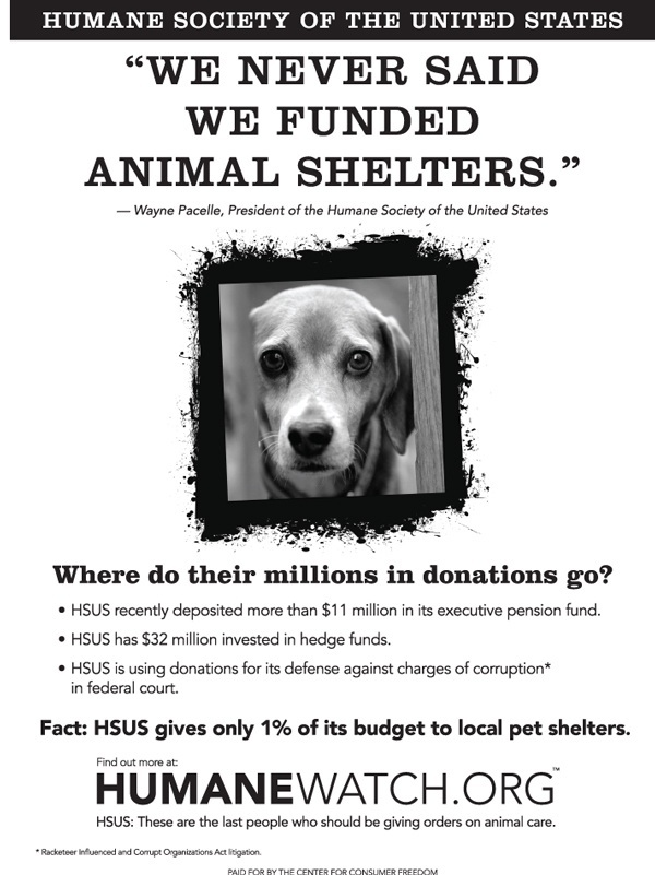 Puppy July2012politicooljpg Hsus Criticized For Minimal Donations To Pet Shelters Beef Magazine