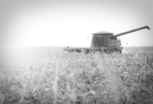 corn harvest combine in field