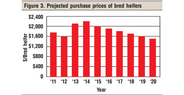 projected purchase prices of bred heifers