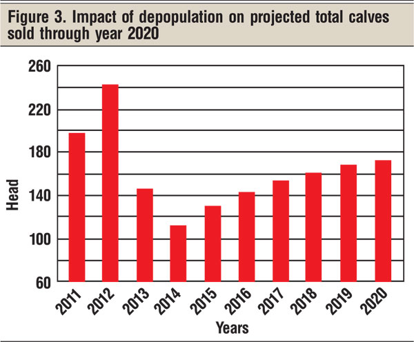 impact of depopulation in cattle herd