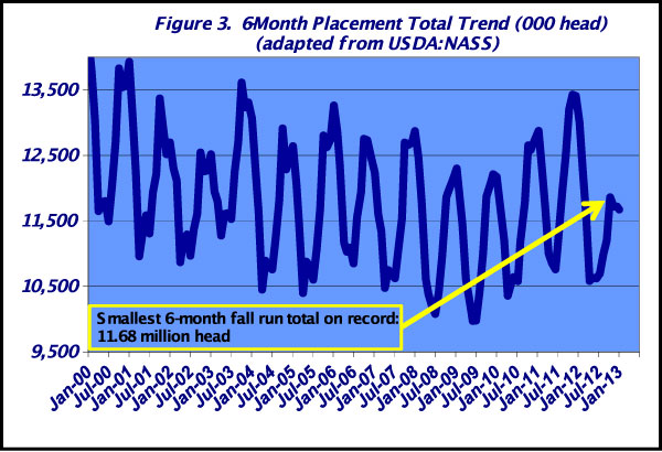 cattle placement trends