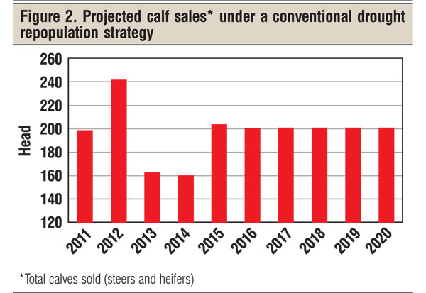 projected calf sales drought
