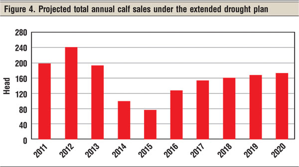 projected total annual calf sales