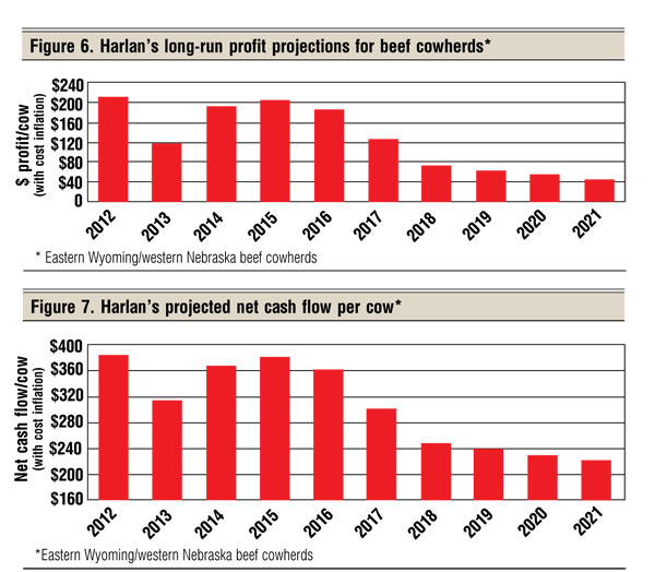 long term beef cow profit projections