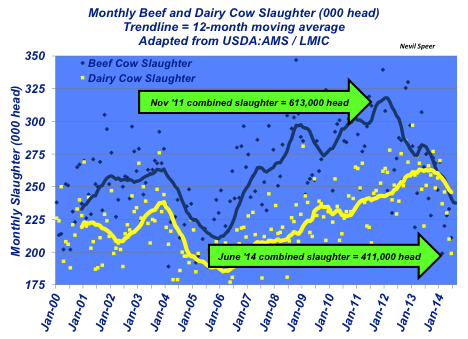 monthly beef and dairy cow slaughter