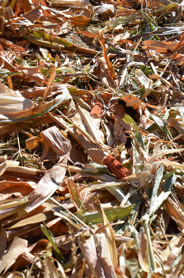 What are corn stalk bales worth beef magazine sciox Choice Image