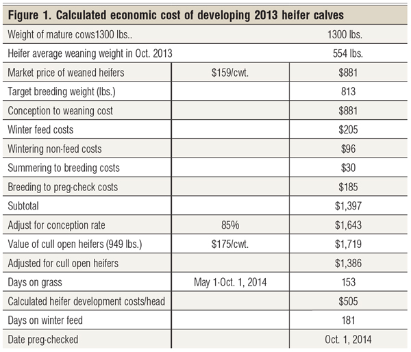calculated economic cost of cattle