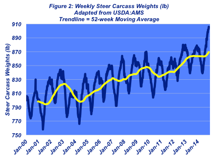 weekly steer carcass weights