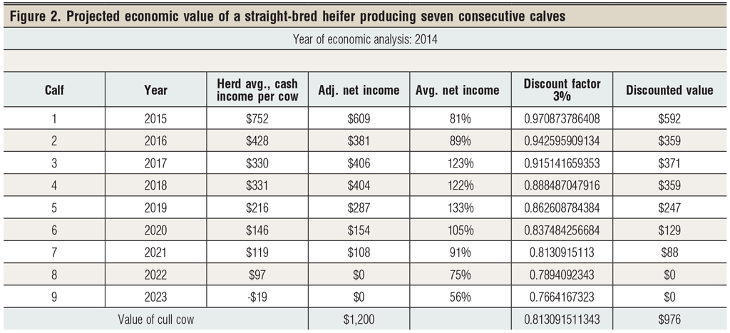 projected income of straight bred heifers