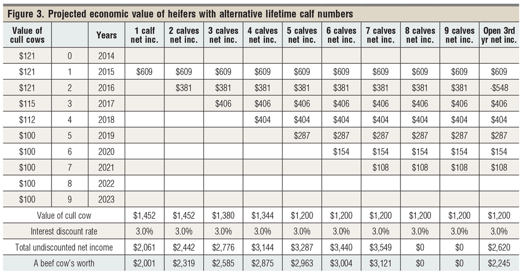 economic value of bred heifers