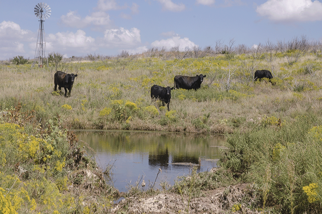 water concerns with animal agriculture
