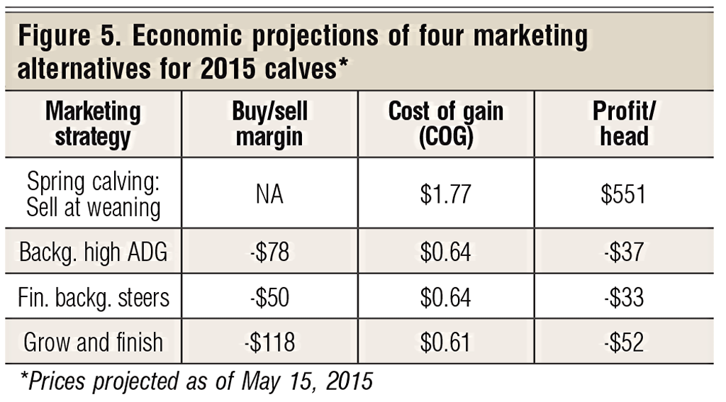 economic projections for calves