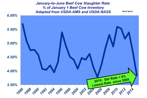 january to june cow slaughter rates