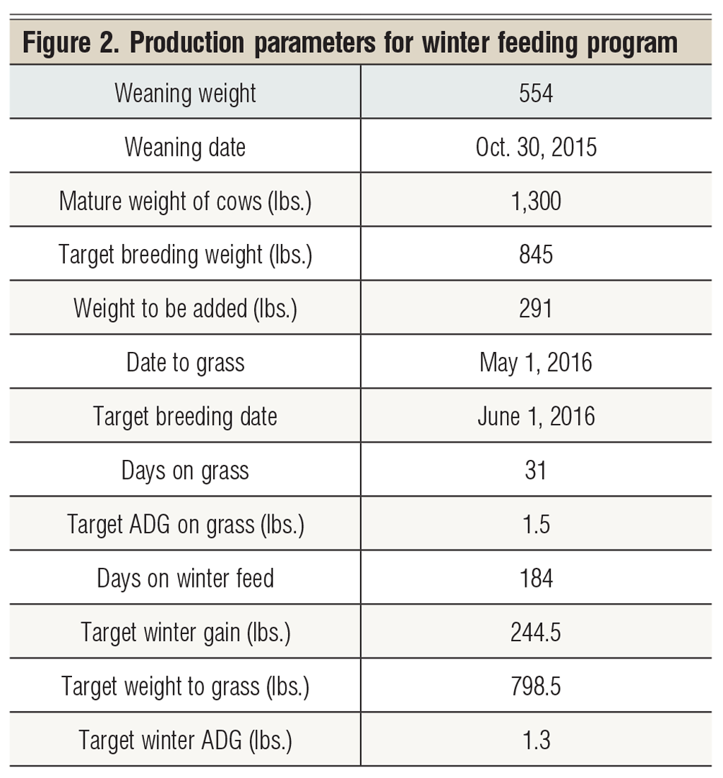 production parameters for beef cows