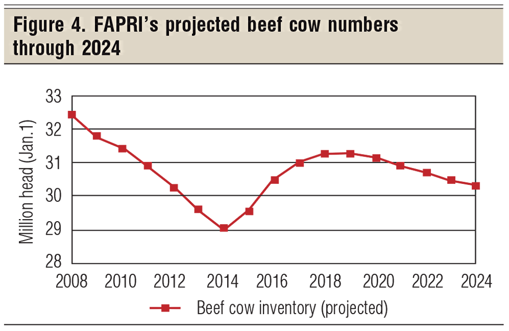 project beef cow numbers through 2024
