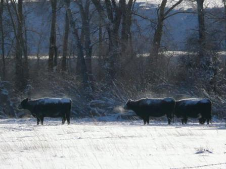 what is overgrazing  beef magazine winter wonderland gallery