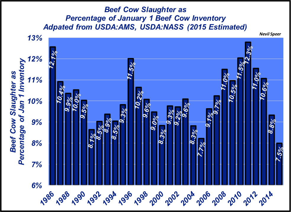 beef cow slaughter 2015