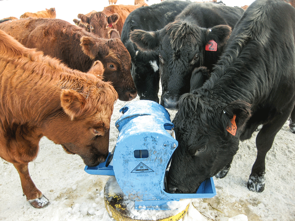 How To Let Your Cattle Pump Their Own Water Beef Magazine