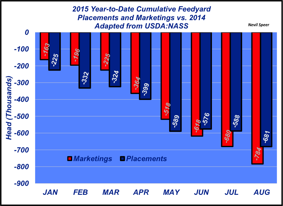 year-to-date feedlot placements