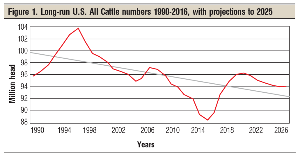 long-run U.S. all cattle numbers