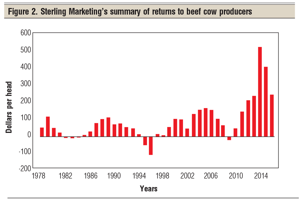 summary of returns to beef cow producers