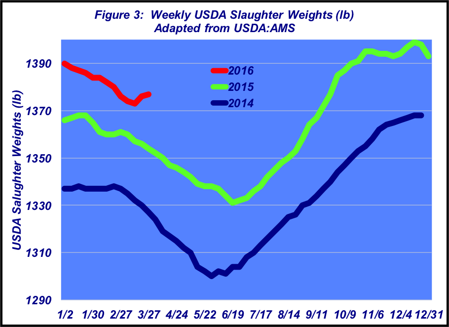 weekly usda slaughter weights
