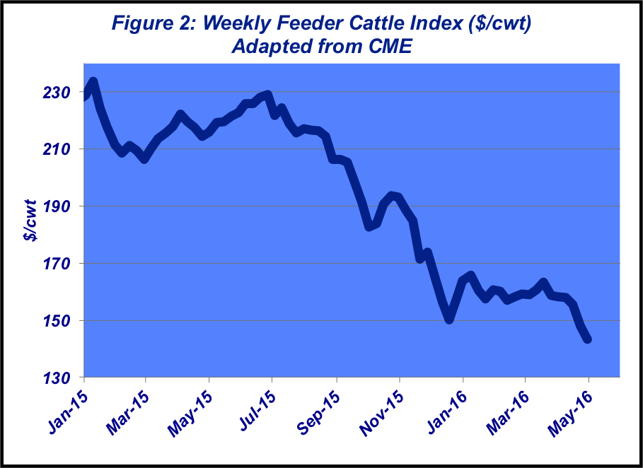 weekly feedlot cattle index
