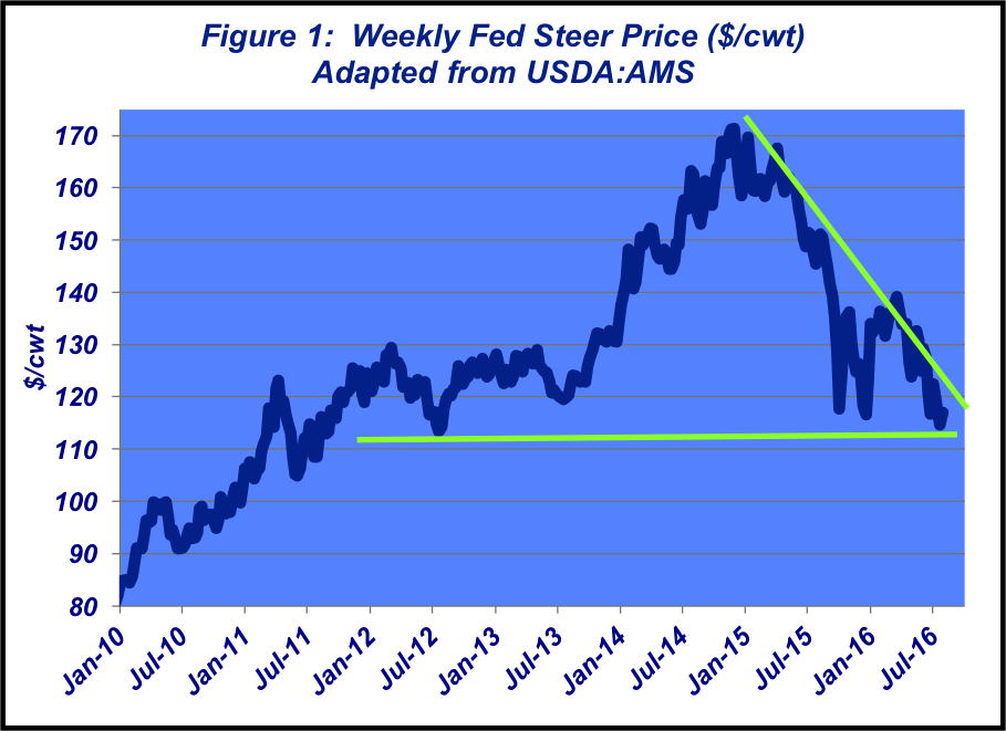 weekly fed steer price