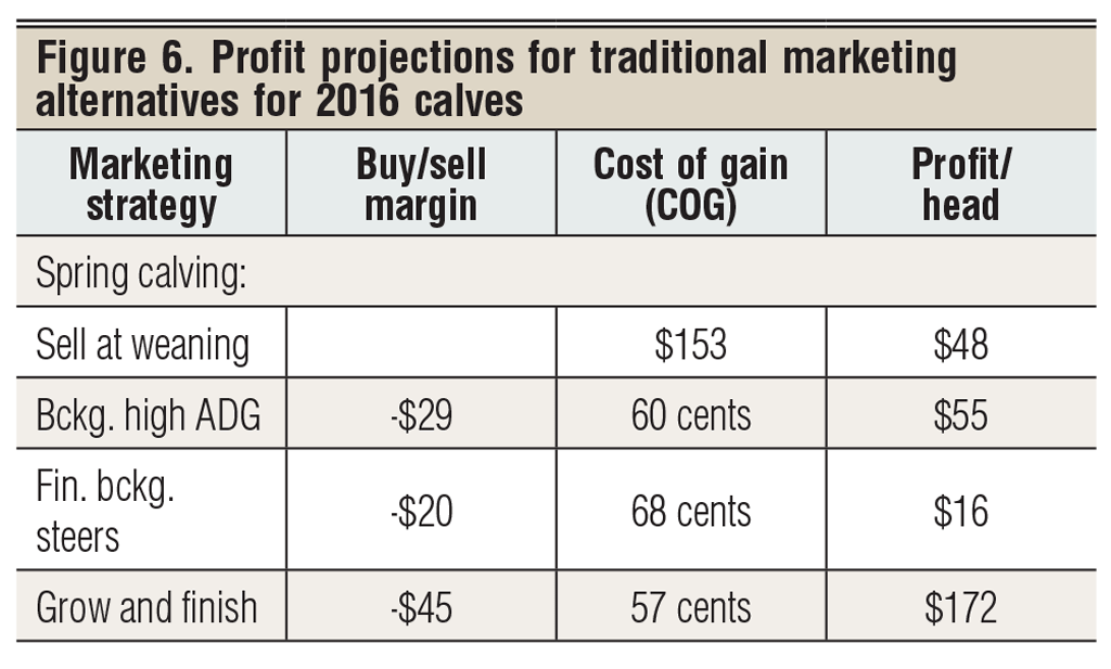 profit projections for 2016 beef calves