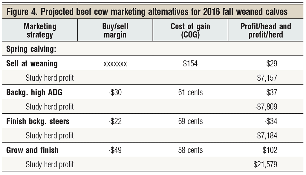 projected beef cow marketing outlook